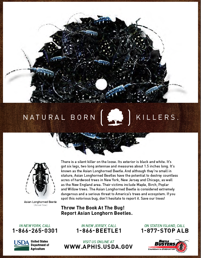 USDA Beetle PSA Art Direction